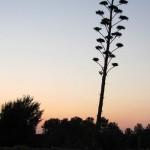 Wordless Wednesday: Rooftop Garden