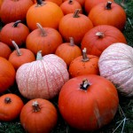 Wordless Wednesday: Waiting for the Pumpkin Patch